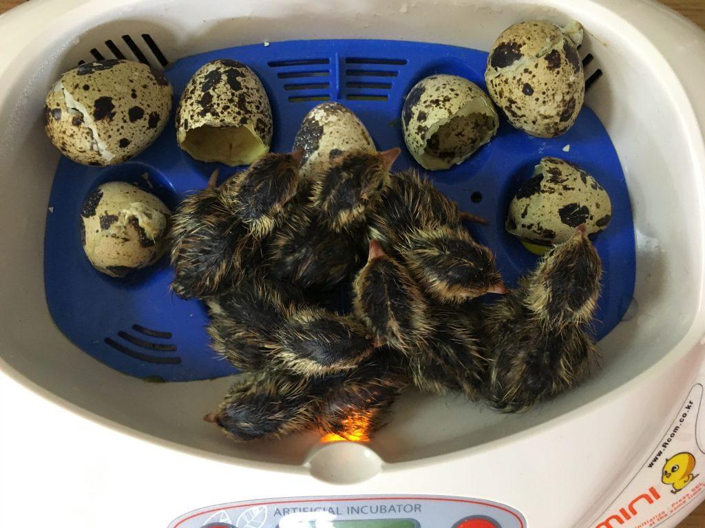 【経済】韓国向け食用生卵輸出が解禁 YouTube動画>2本 ->画像>17枚